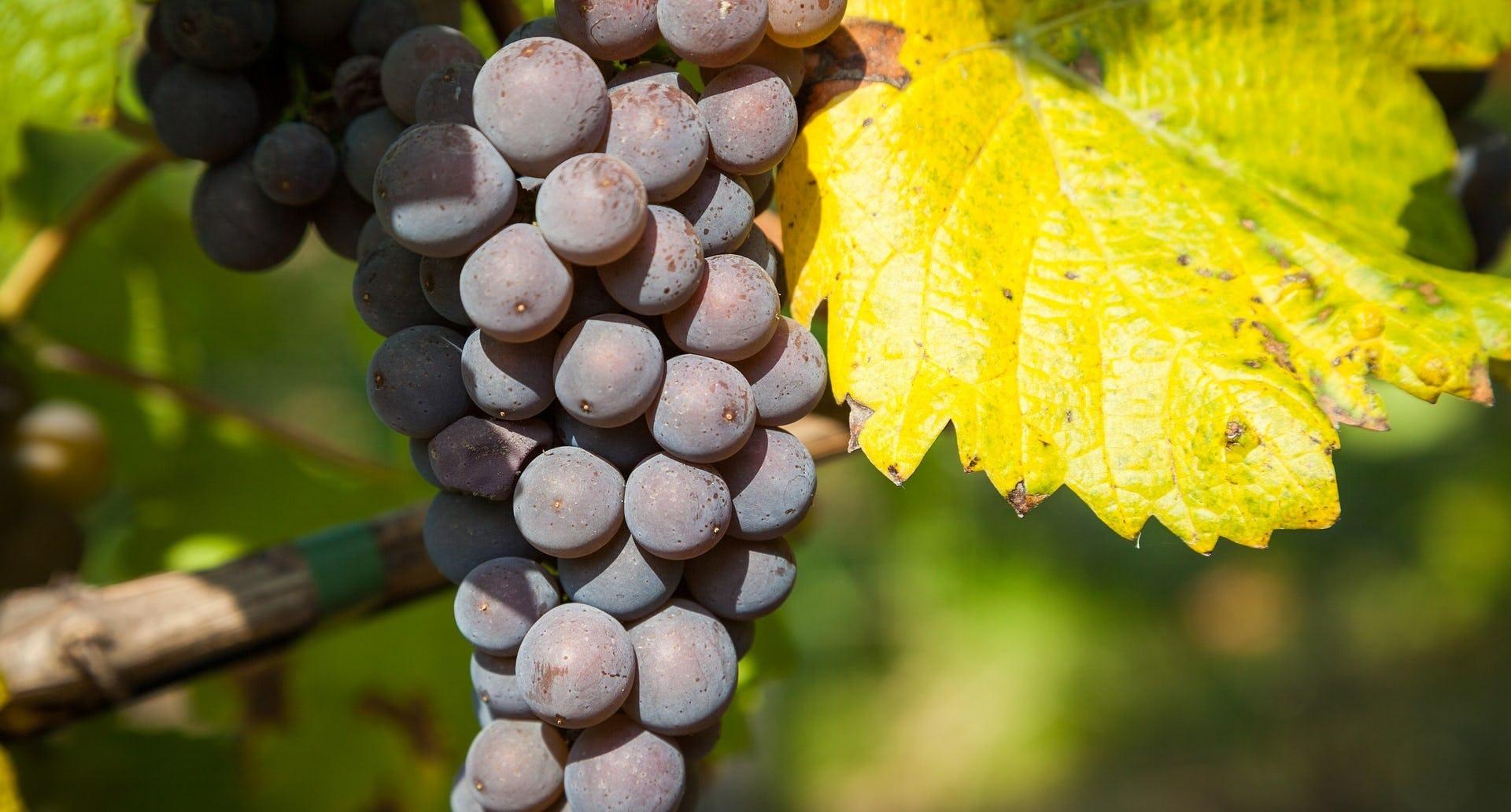 Weinreise Suedtirol Ramsauer Carreisen