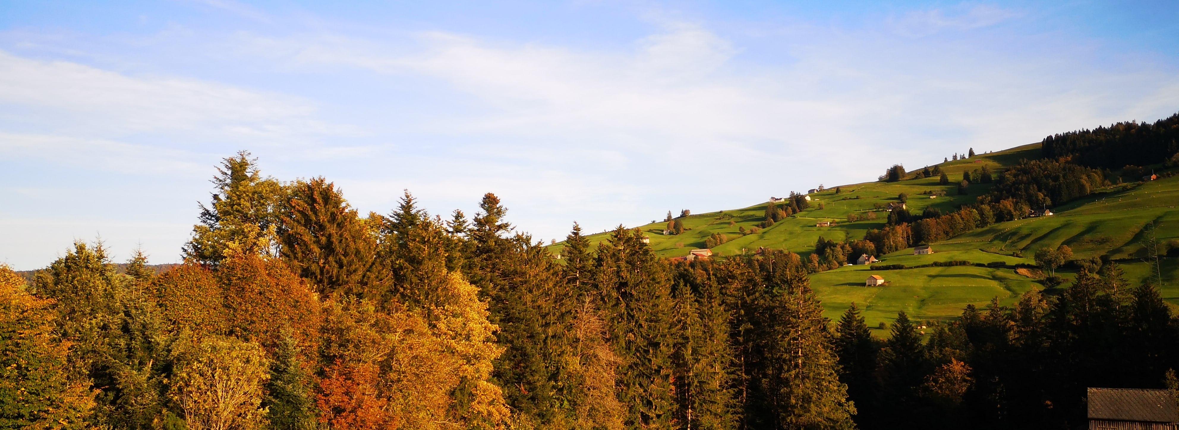 Herbstwälder Tagesreise